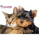◾Rachaelhale & Pets Puppies
